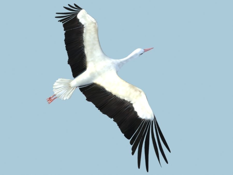 LOW POLY WHITE STORK 3D MODEL FULLY RIGGED & ANIMATED royalty-free 3d model - Preview no. 19