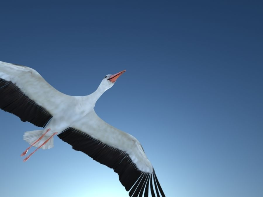 LOW POLY WHITE STORK 3D MODEL FULLY RIGGED & ANIMATED royalty-free 3d model - Preview no. 17