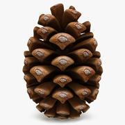 Conifer Cone 3d model