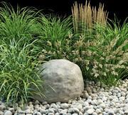 garden grasses 3d model