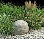 정원 목초 3d model