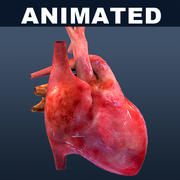 Heart ANIMATED textured 3d model