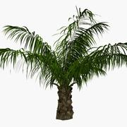 palma olejowa 3d model
