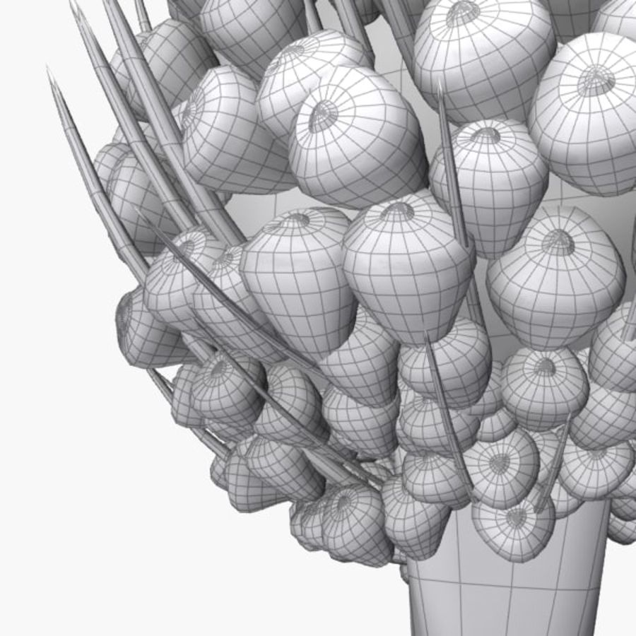 oil palm fruit royalty-free 3d model - Preview no. 5