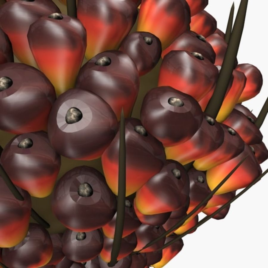 oil palm fruit royalty-free 3d model - Preview no. 3