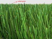 Instance de l'herbe réaliste Maya 3d model