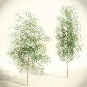 桦树低多边形集 3d model