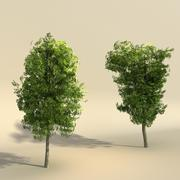Elm Tree Low Polygon Set modelo 3d