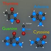 分子 3d model