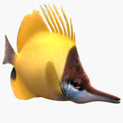 Long Nose Butterfly Fish 3d model