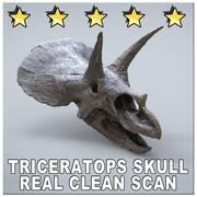 TRICERATOPS SKULL MUSEUM SCAN 3d model