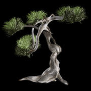 Витое дерево 3d model