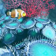 3D Zoanthid珊瑚 3d model