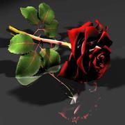 红白玫瑰 3d model