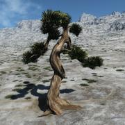 盆景树 3d model