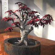 3D枫树盆景树 3d model