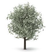 Money tree 3d model