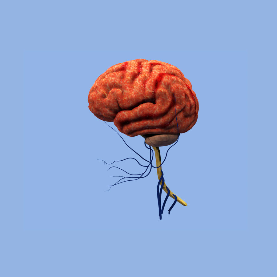 Real human brain 3D Model $4 - .obj .oth .fbx .3ds .dxf .c4d - Free3D