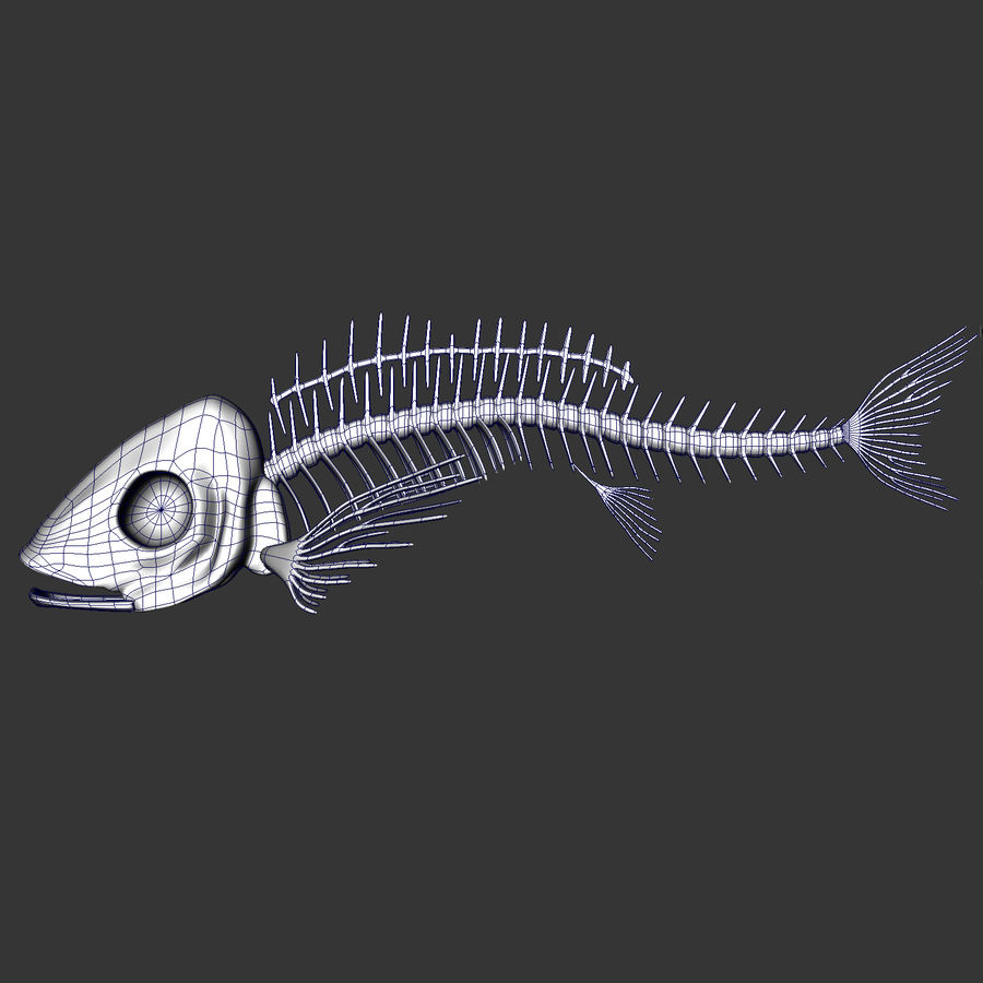 Fish Skeleton royalty-free 3d model - Preview no. 6