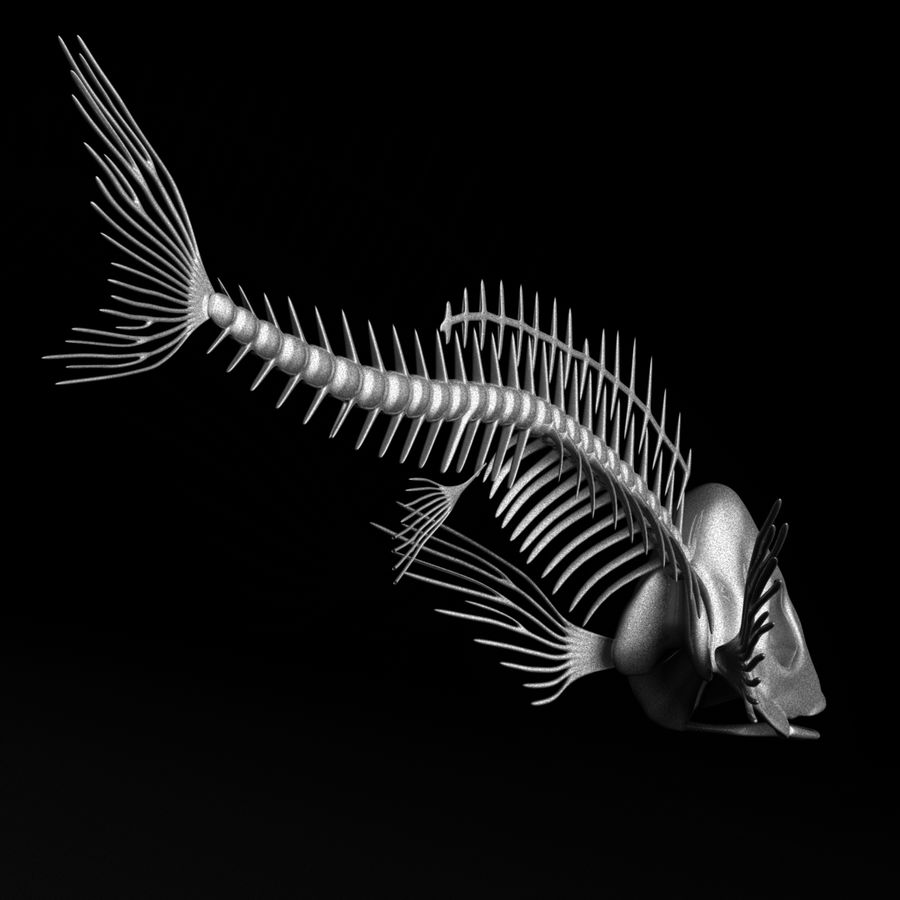 Fish Skeleton royalty-free 3d model - Preview no. 3