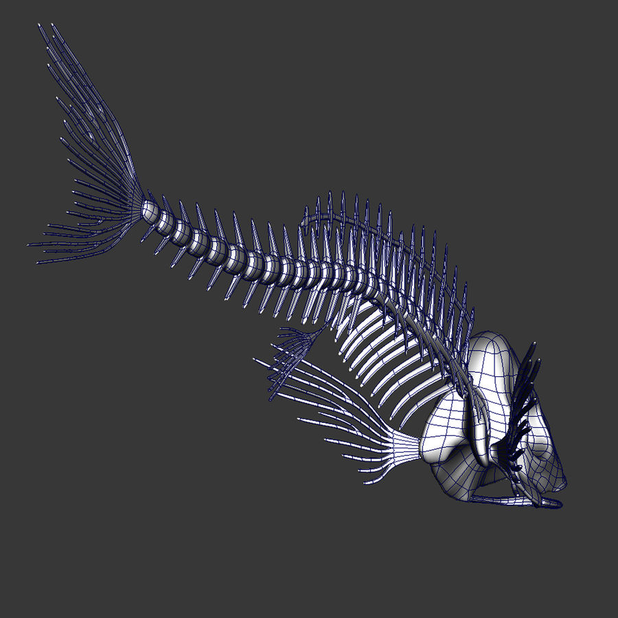 Fish Skeleton royalty-free 3d model - Preview no. 4