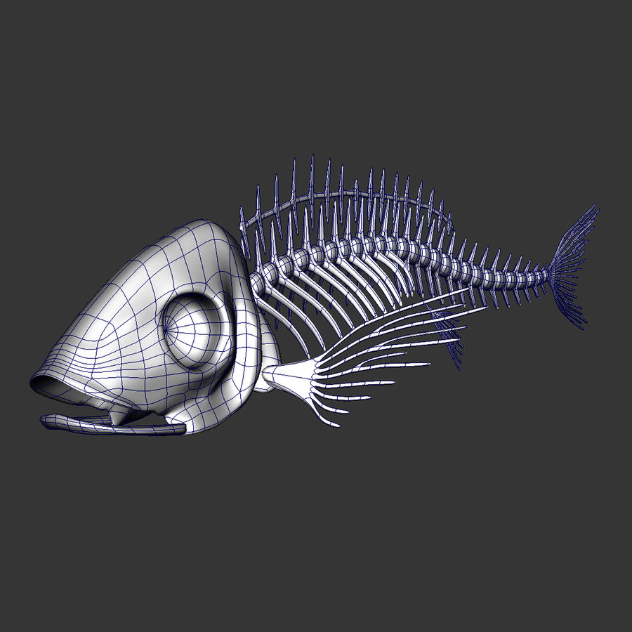 Fish Skeleton royalty-free 3d model - Preview no. 8
