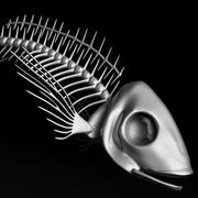 Squelette de poisson 3d model