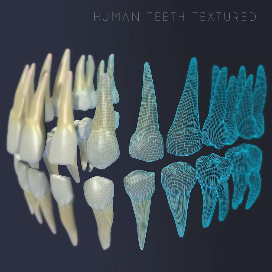 Dentes humanos texturizados royalty-free 3d model - Preview no. 1
