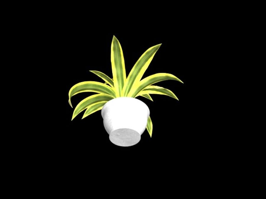 Agave plants royalty-free 3d model - Preview no. 5