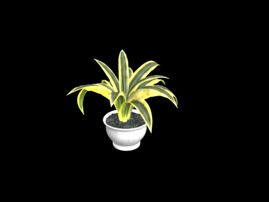 Agave plants royalty-free 3d model - Preview no. 3