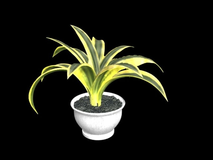 Agave plants royalty-free 3d model - Preview no. 1