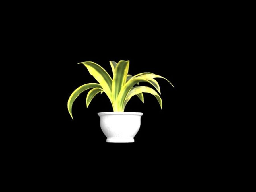 Agave plants royalty-free 3d model - Preview no. 4