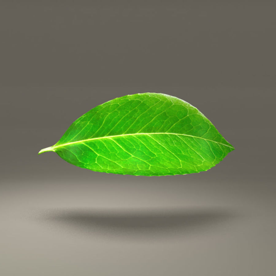 Groen blad royalty-free 3d model - Preview no. 1