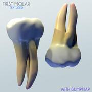 Human First Molar 3d model
