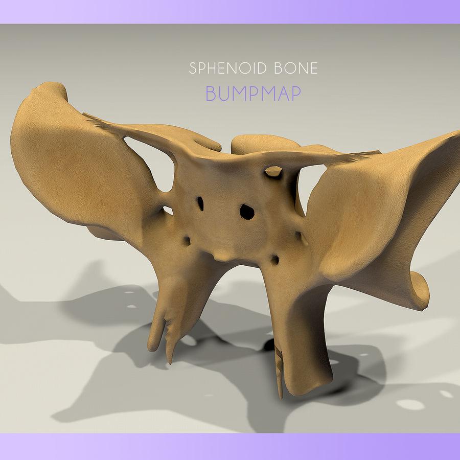 Anatomy Sphenoid Bone royalty-free 3d model - Preview no. 3