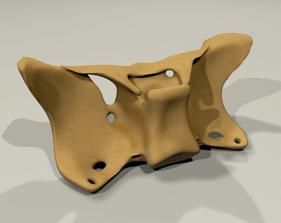Anatomy Sphenoid Bone royalty-free 3d model - Preview no. 7