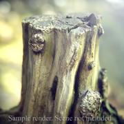 나무 그루터기 1 3d model