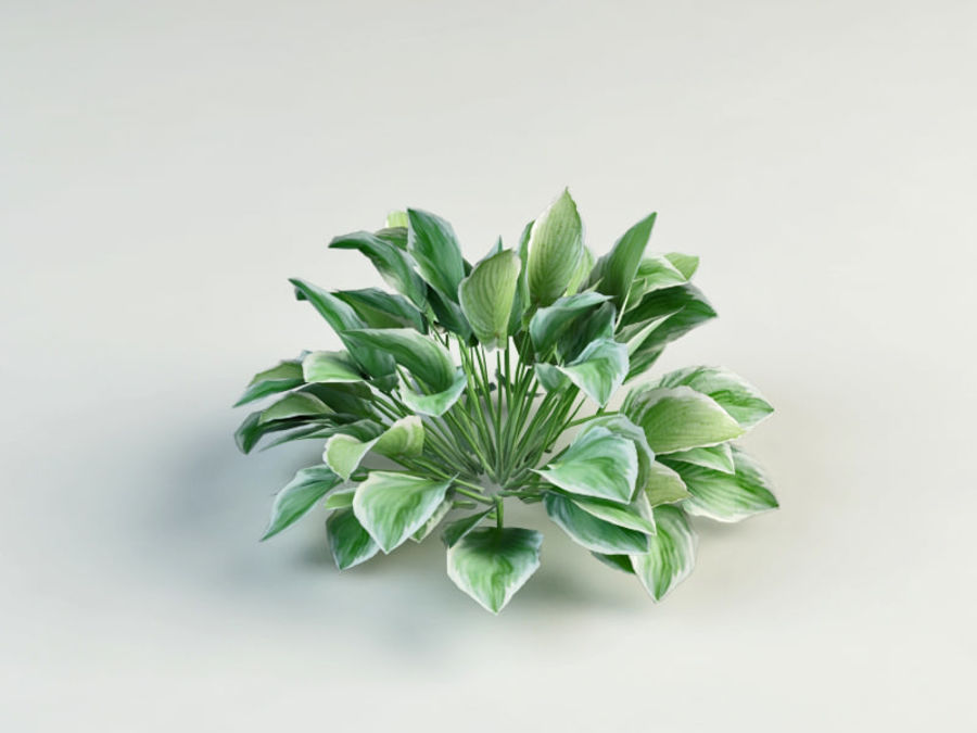 flower composition royalty-free 3d model - Preview no. 11