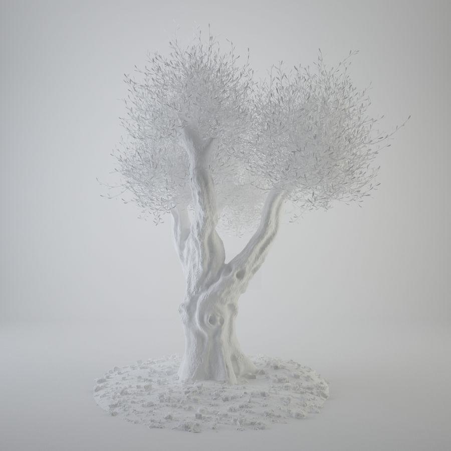 オリーブの木 royalty-free 3d model - Preview no. 3