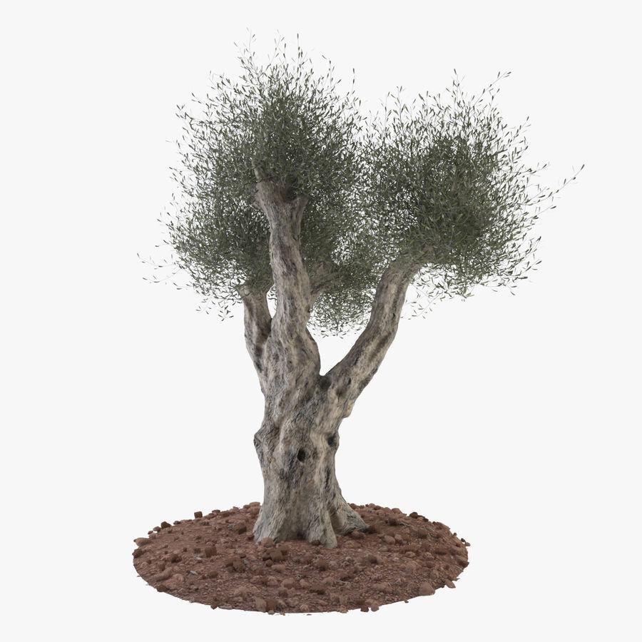 オリーブの木 royalty-free 3d model - Preview no. 1