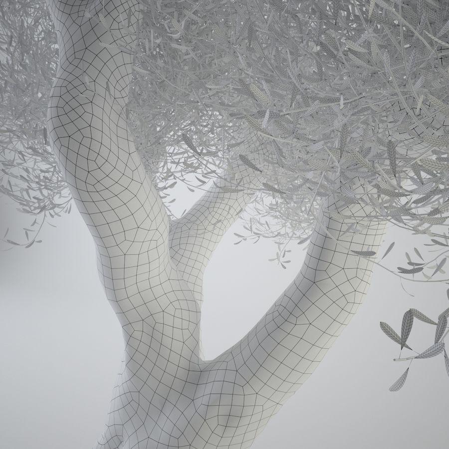 オリーブの木 royalty-free 3d model - Preview no. 7