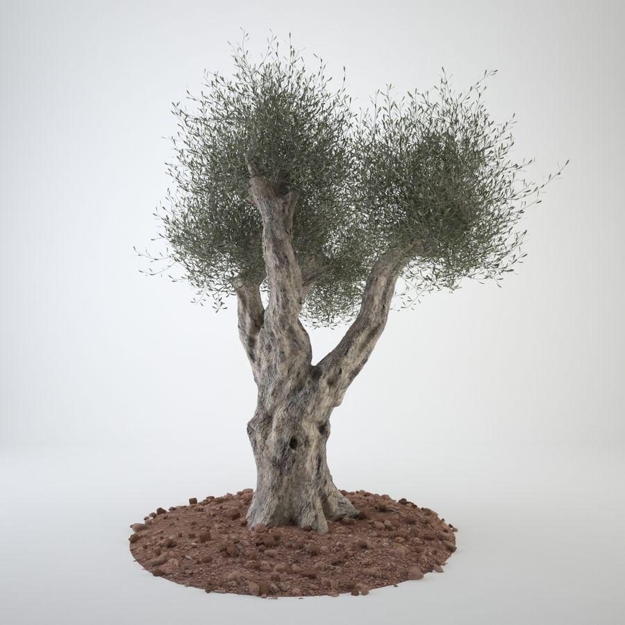オリーブの木 royalty-free 3d model - Preview no. 2