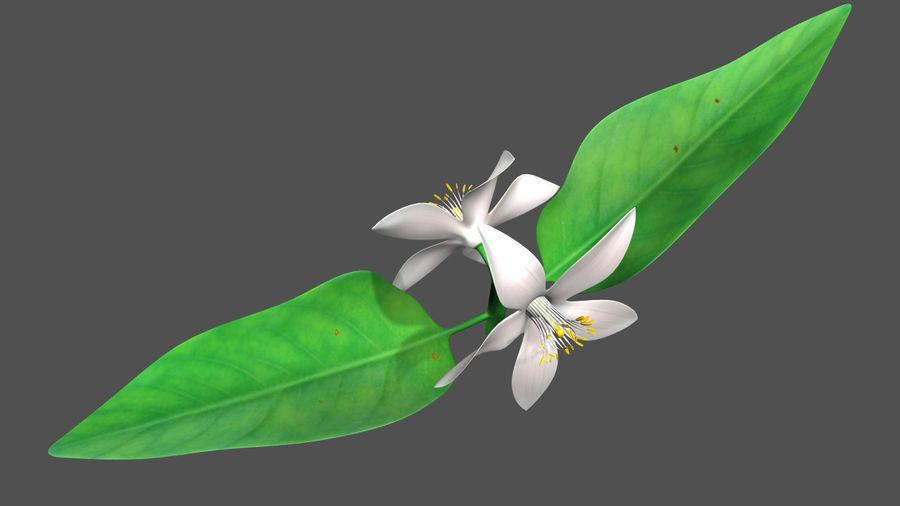 Citrus flower royalty-free 3d model - Preview no. 1