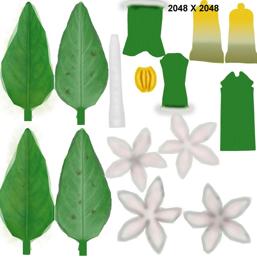 Citrus flower royalty-free 3d model - Preview no. 6