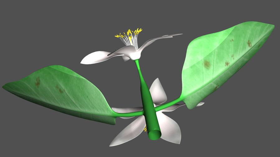 Citrus flower royalty-free 3d model - Preview no. 2
