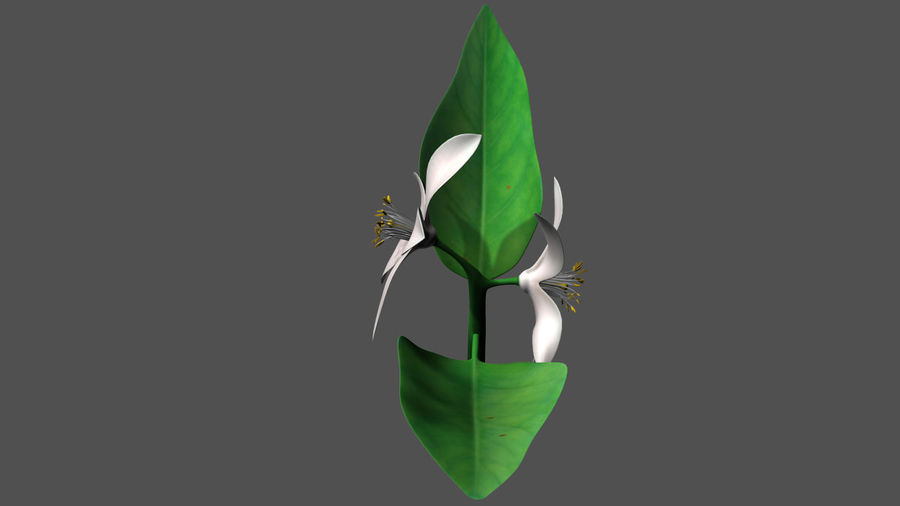 Citrus flower royalty-free 3d model - Preview no. 5