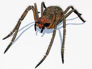 Phoneutria spider 3d model