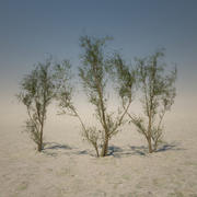 Big Desert Tree 3d model