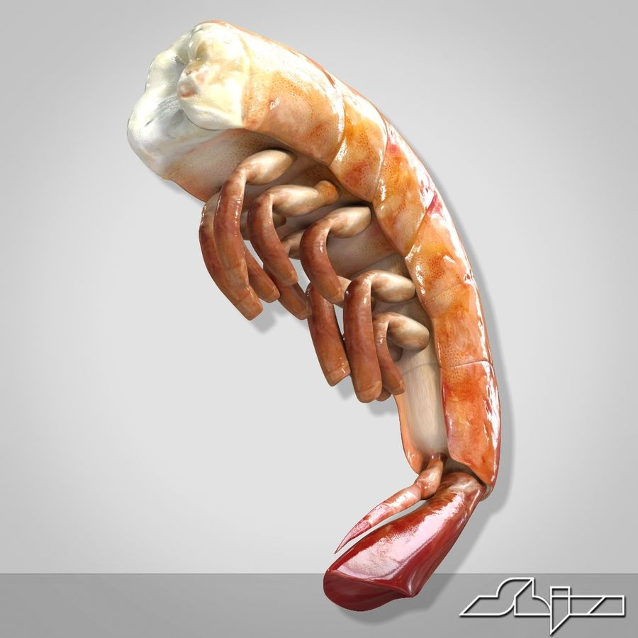 Shrimp 3 Cooked royalty-free 3d model - Preview no. 1