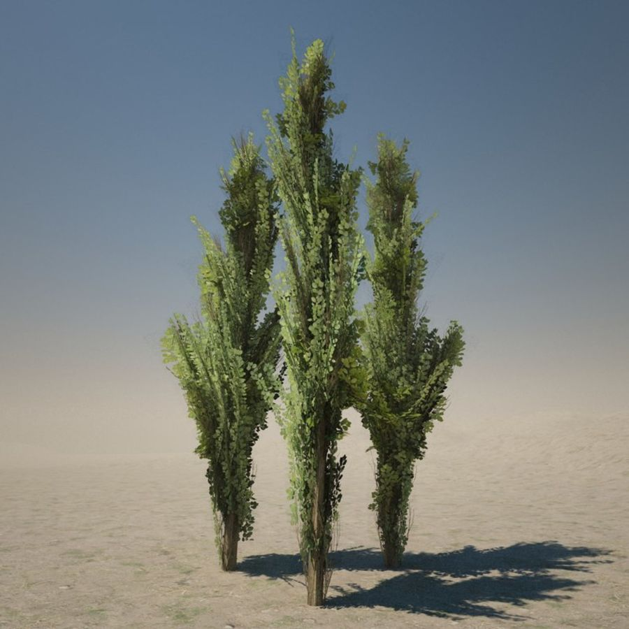 Drzewo cyprysowe royalty-free 3d model - Preview no. 1